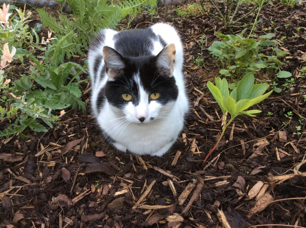 Cat and resilient peony. I'm not sure how resilient it is to being sat on though.