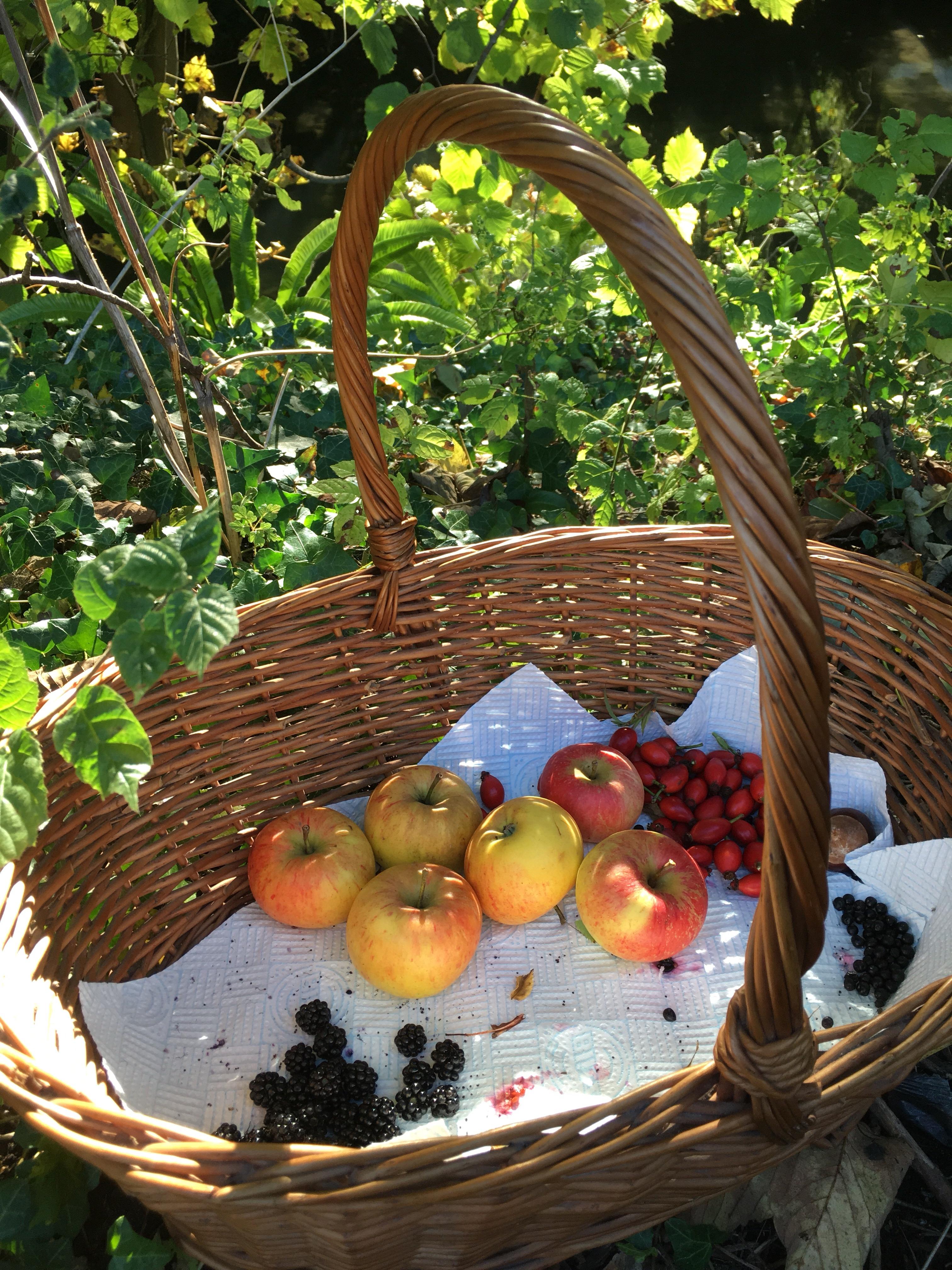 Foraging apples, blackberries, elderberries, rosehips